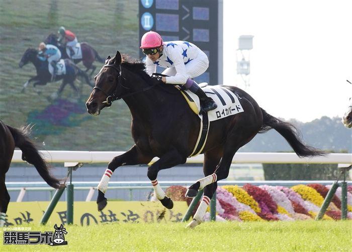 ロイカバードVSサトノダイヤモンドの新馬戦は5億円対決として話題を集めた